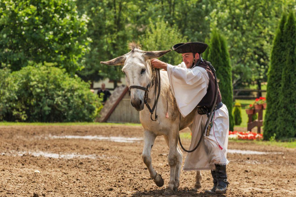 donkey-edith-cabayag-animal-domestic-animal-38539