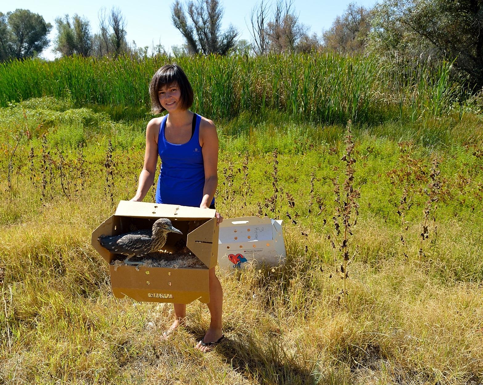 WWOOF volunteering - releasing herons