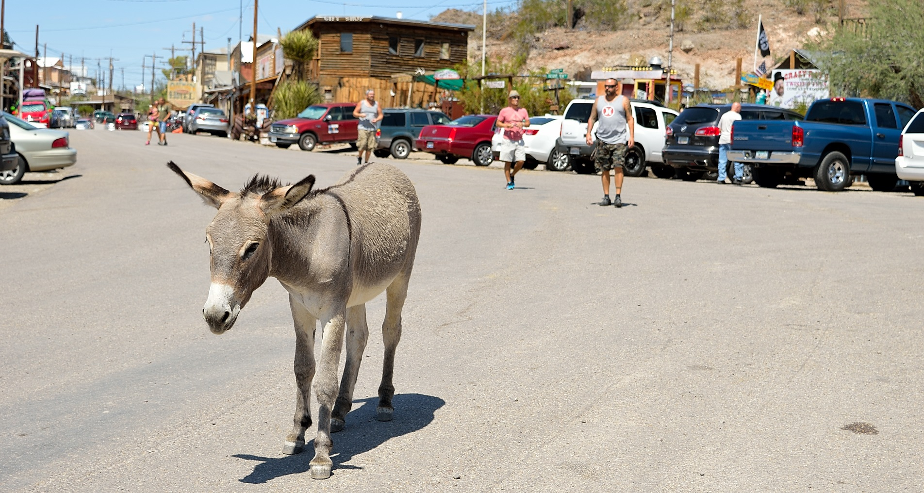 Oatman, Arizona. A place abandoned by people and inhabited by wild donkeys only.