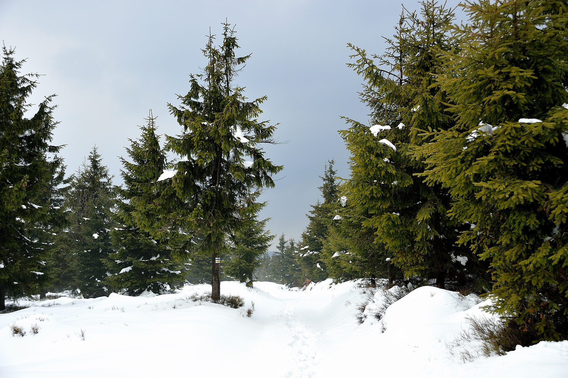 wielka sowa crown of polish mountains