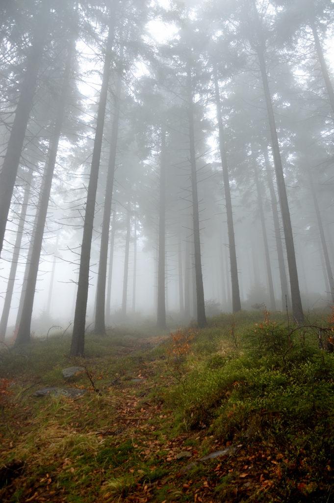 trail to skalnik crown of Polish mountains