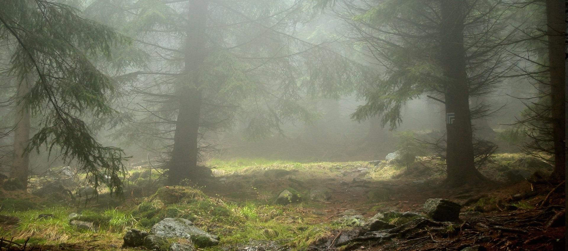 skalnik korona gór polski