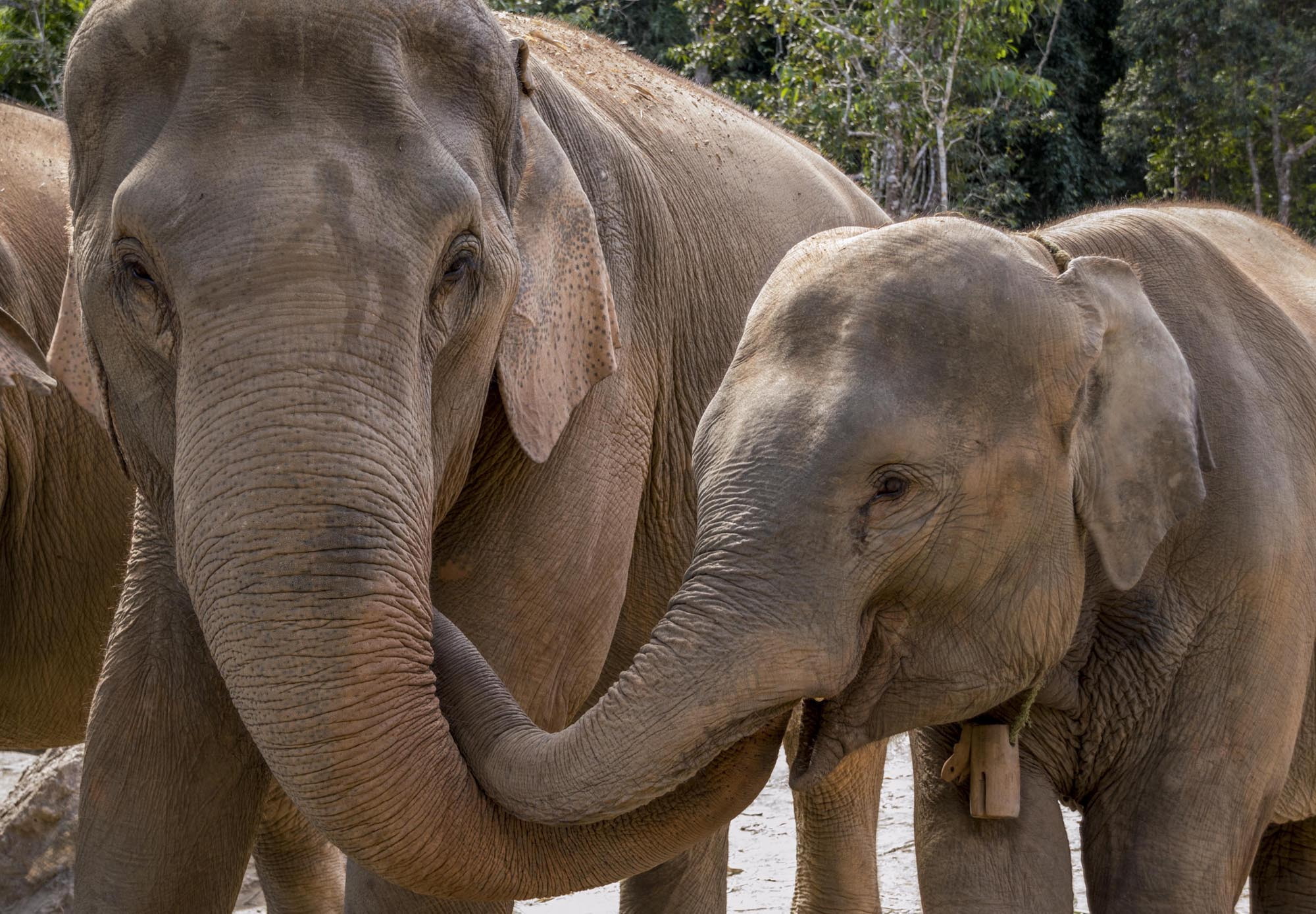 things to do in Chiang Mai - elephant sanctuary
